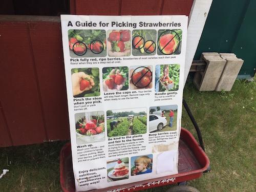 recoger fresas de verano connecticut
