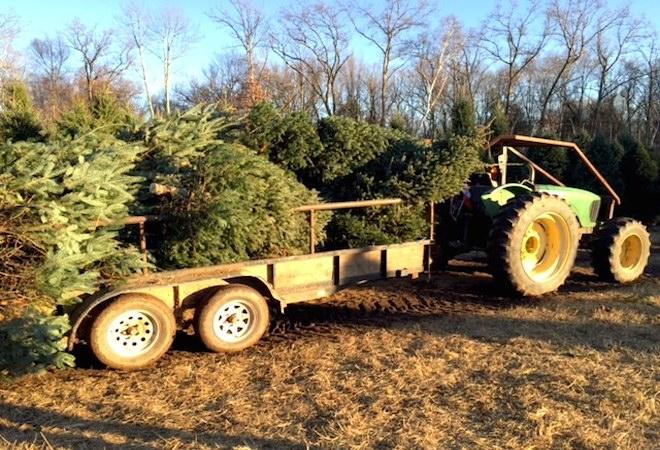 Granja Arbol de Navidad Connecticut