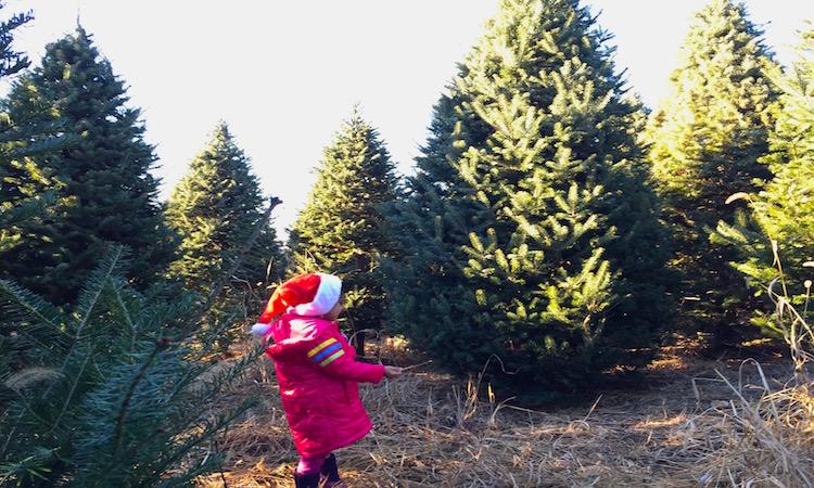 granjas de arboles de Navidad Connecticut